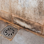 Mold Remediation Services Freehold Borough