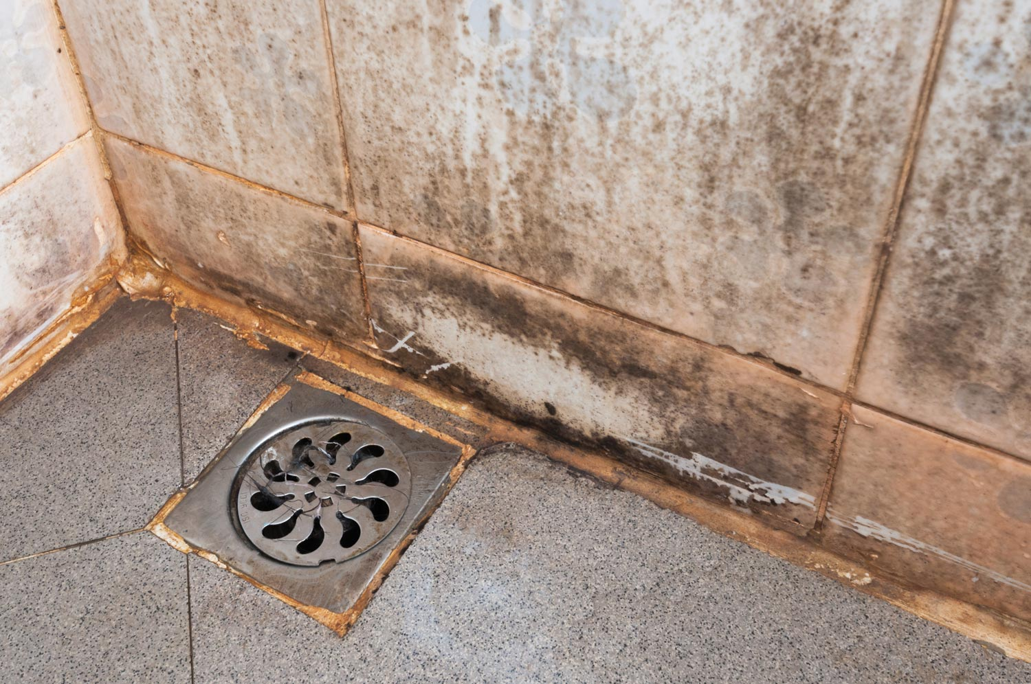 Top 7 Places Where Toxic Mold Lives In Your Home